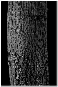 Stablo, Bojan Koštić